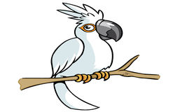 White parrot cartoon Royalty Free Stock Photos