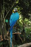 The blue parrot in the zoo royalty free stock images