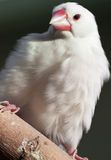 White parrot on tree branch (1) Stock Photography