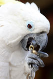 White parrot in a zoo Stock Photos