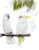 White Parrots Stock Photography