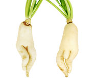 White parsnip vegetables. ,over white background Royalty Free Stock Photos