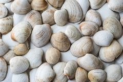 White and pastel collection of shells royalty free stock image