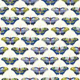 White patern with butterfly. stock image