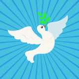 White Peace dove with olive branch for International Peace Day poster on ray background Royalty Free Stock Photography