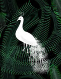 White peacock bird on jungle palm leaves background poster. White peacock bird on jungle palm leaves on dark background poster Stock Image