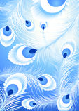 White peacock feather background Stock Images