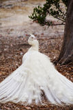 White peacock looking over shoulder Royalty Free Stock Photography