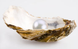 White pearl. Is in a shell Royalty Free Stock Photos