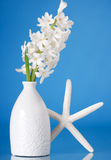White pearl hyacinth Royalty Free Stock Images