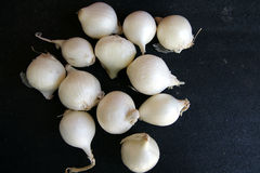 White pearl onion, Allium cepa. Bulbs usually 2-4 cm in diameter with white papery skin and white fleshy layers within, in true pearl onion (Allium porrum var Stock Images