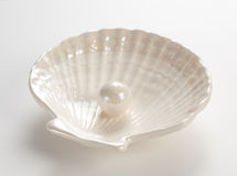 White pearl in the shell. On white background Royalty Free Stock Photo