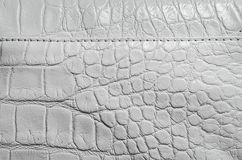 White pearl texture of reptile skin Royalty Free Stock Image