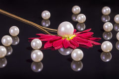 White pearls necklace on black background Royalty Free Stock Images
