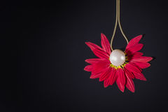 White pearls necklace over red petals on black Royalty Free Stock Photos