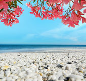 White pebbles and pink flowers Royalty Free Stock Images
