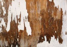 White Peeling Paint. A closeup section of weather aged white peeling  paint on textured wood Royalty Free Stock Photo