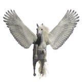 White Pegasus on White Stock Image