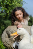 White Pekin Duck. A big white peking duck and a girl who is about to caress it Stock Photography