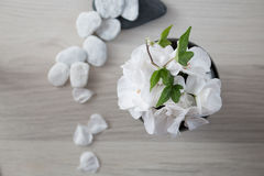 White pelargonium flower Stock Photography