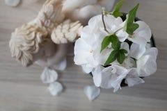 White pelargonium flower Royalty Free Stock Photos