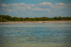 White pelicans by the river, nature reserve of Rio Lagartos, Mexico. Yucatan. White pelicans in the nature reserve of Rio Lagartos, Mexico. Yucatan, river Stock Image