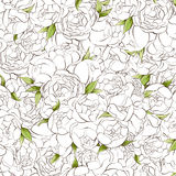 White peonies background Stock Images