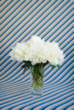 White peonies bouquet in a crystal vase on a striped background Royalty Free Stock Photography