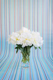 White peonies bouquet in a crystal vase on a striped background Stock Photo
