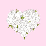White peonies heart Stock Images