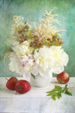 White peonies Stock Photos