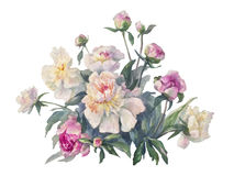 White peonies spray watercolor. Bouquet of white and pink peonies watercolor Stock Photos