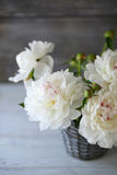 White peonies in a vase Stock Image