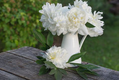White peonies Stock Photo