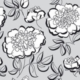 White peony floral sketch. spring flower Royalty Free Stock Photos