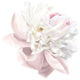 White peony flower. Luxurious white peony flower painted in pastel colors Royalty Free Illustration