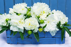 White peony flowers Stock Photos