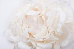 White peony petals closeup, summer flowers macro shot. Natural t Stock Photos