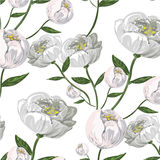 White Peony vector seamless pattern. Peony seamless pattern stock vector illustration hand drawn Royalty Free Stock Photography