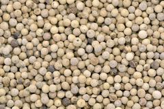 White pepper Royalty Free Stock Images