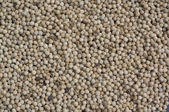 White pepper corns Royalty Free Stock Image