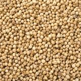 White pepper grains Stock Photos
