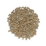 White pepper Stock Image