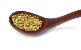 White pepper peppercorns Stock Images