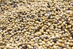White pepper seeds Stock Photography