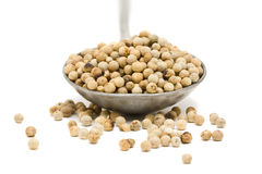 White peppercorns on metal spoon Stock Photography