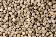 White Peppercorns (Piper nigrum) Stock Image