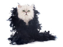 White persian cat and boa Stock Image