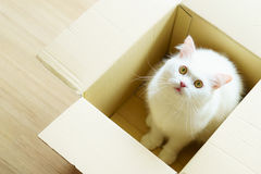White persian fluffy cat in a present box Stock Photo