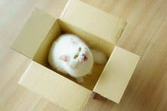 White persian fluffy cat in a present box Royalty Free Stock Images